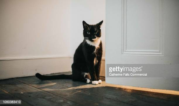 cat sitting in a doorway - black cat stock photos and pictures