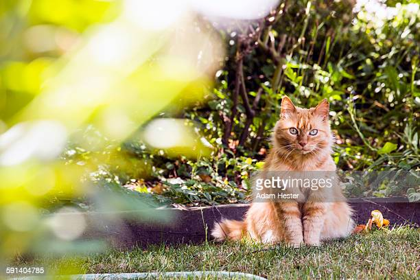 cat sitting in backyard grass - cat family stock pictures, royalty-free photos & images