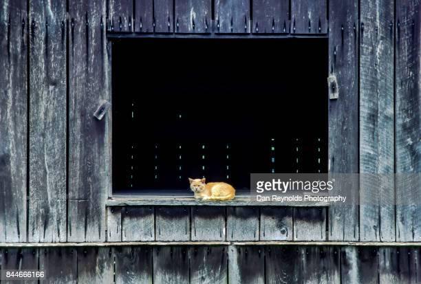 Cat sitting in barn window opening