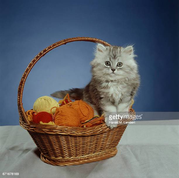 cat sitting in basket with wool at side  - pawed mammal stock pictures, royalty-free photos & images