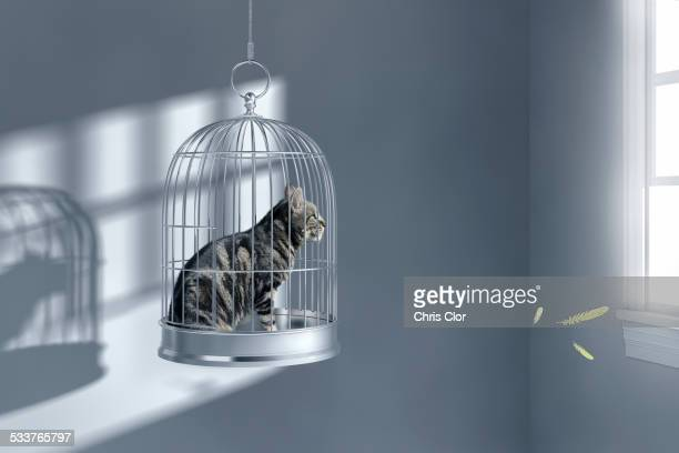 Cat sitting in birdcage