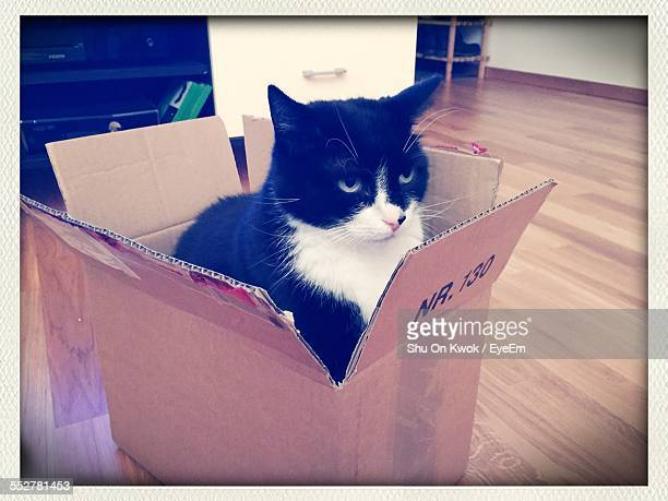 Cat Sitting In Cardboard Box