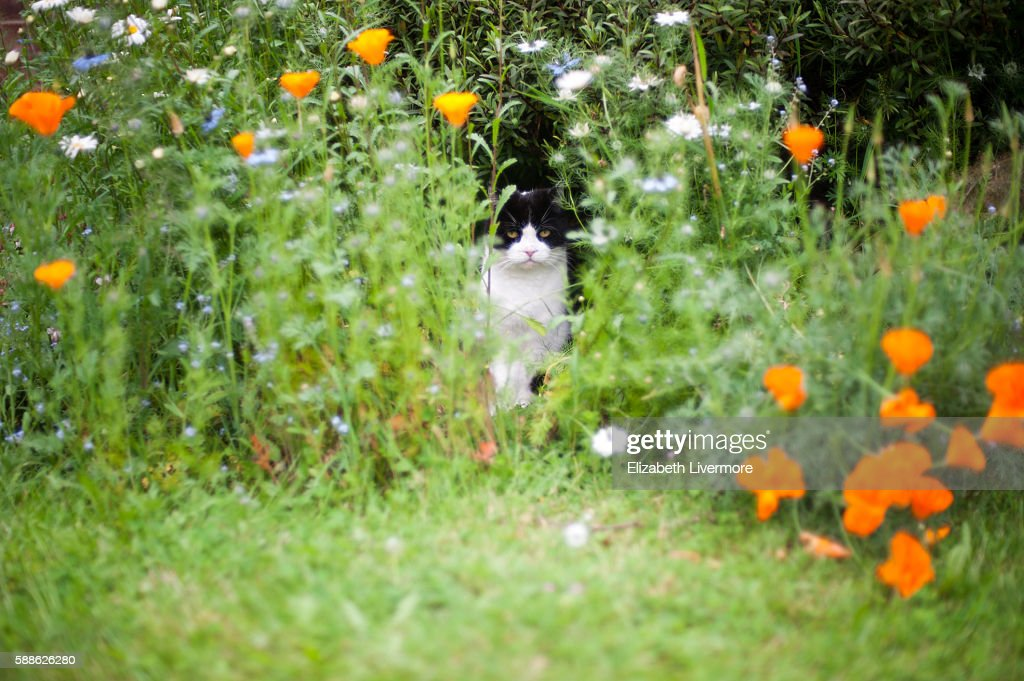 Cat Sitting In Flowerbed Stock Photo