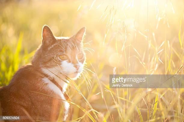 Cat sitting in grass
