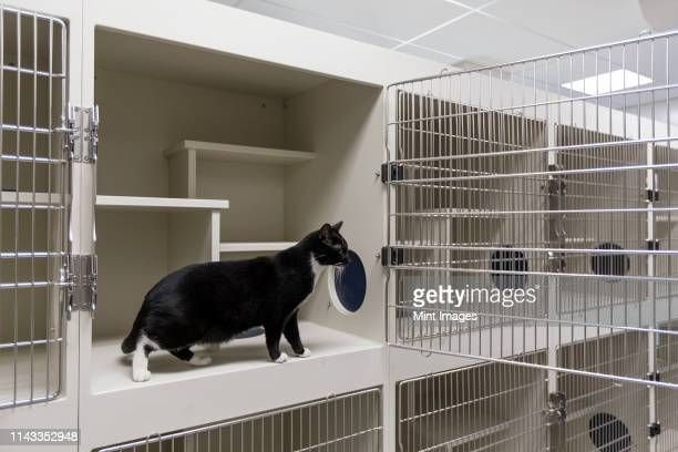 cat sitting in open cage in animal shelter - humane society stock pictures, royalty-free photos & images