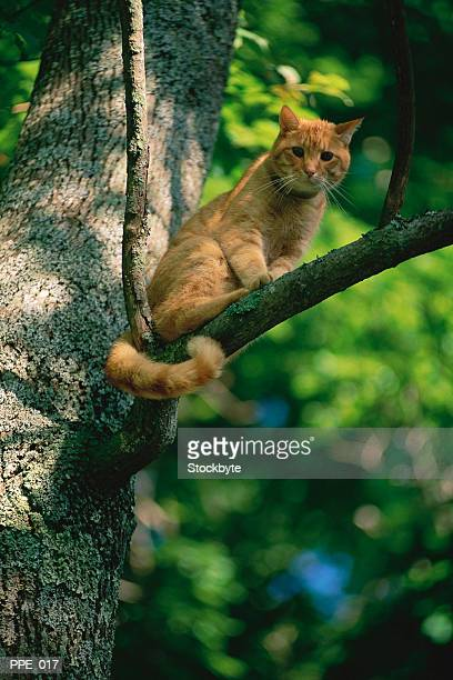 Cat sitting in tree