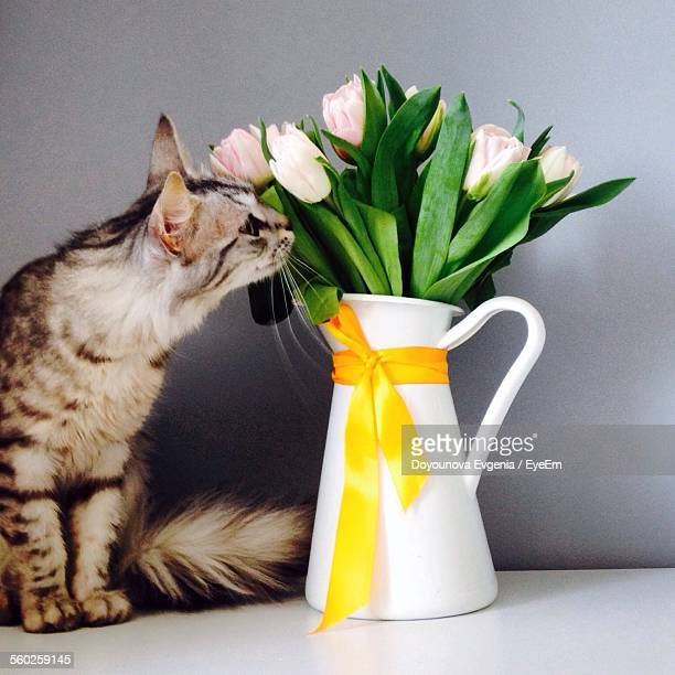 Cat Sitting Next To Vase With Tulips