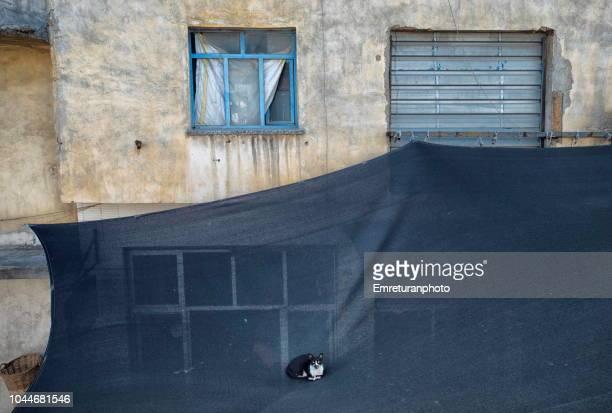 Cat sitting on a black sunshade tent in kemeralti,Izmir.