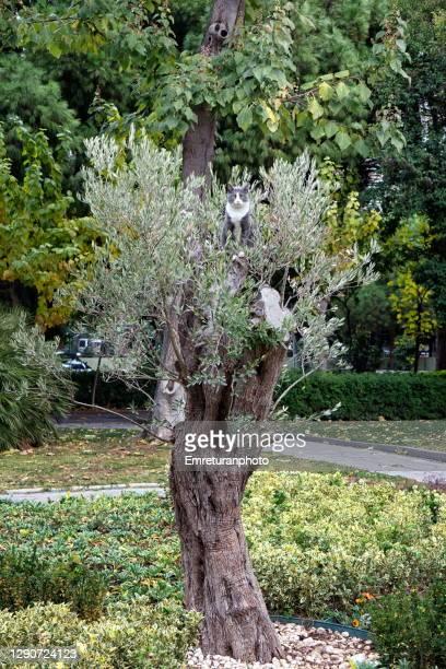 cat sitting on an olive tree in public park in izmir. - emreturanphoto stock-fotos und bilder