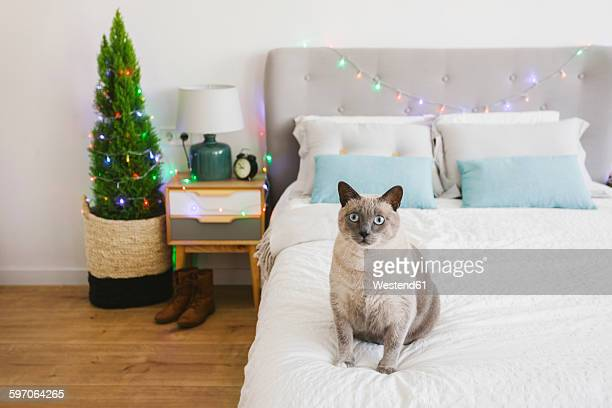 Cat sitting on bed at Christmas time