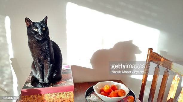 Cat Sitting On Box By Fruits On Table