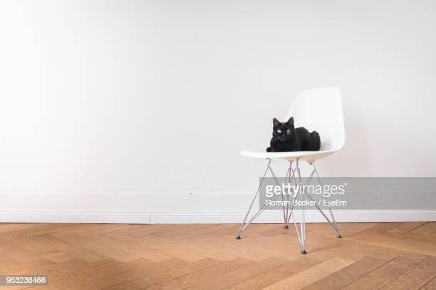 Cat Sitting On Chair Against White Wall