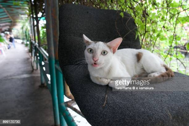 A cat sitting on chair near the river in Bangkok in Thailand