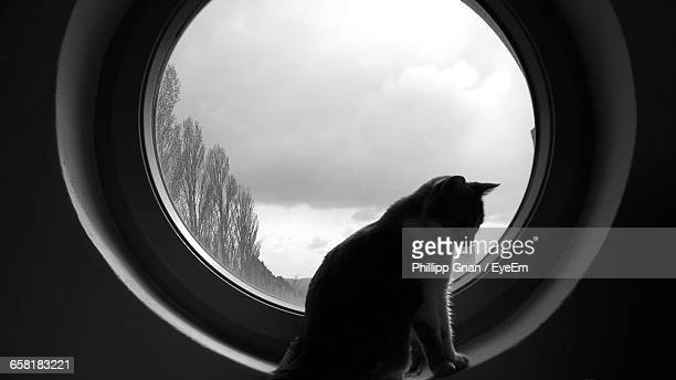 Cat Sitting On Circular Glass Window