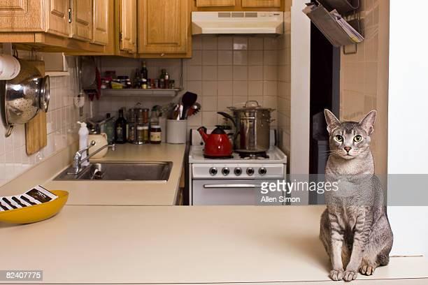 pussy kitchen
