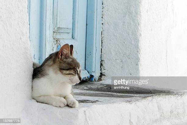 Cat sitting on door way in Mykonos, Greece