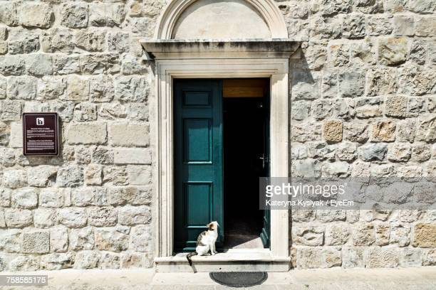 Cat Sitting On Doorway By Wall