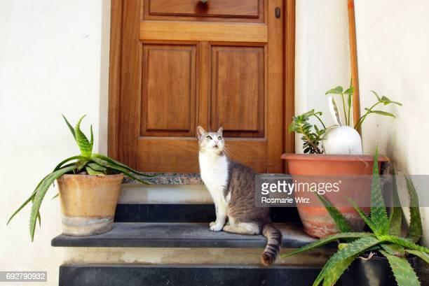 Cat sitting on home doorstep