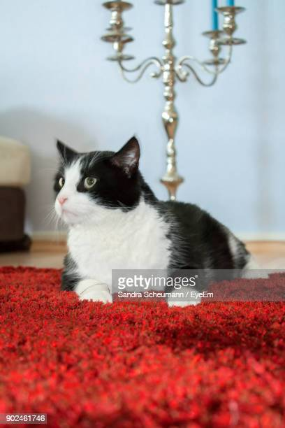 Cat Sitting On Red Rug