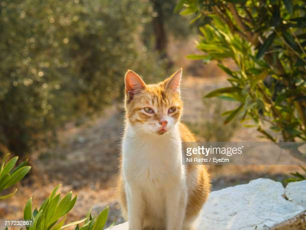 cat sitting on retaining wall in yard - aegean turkey stock pictures, royalty-free photos & images