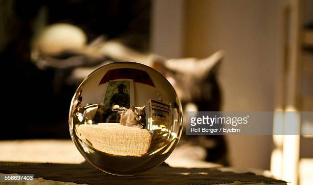 Cat Sitting On Table Refracted In Sphere Crystal Ball