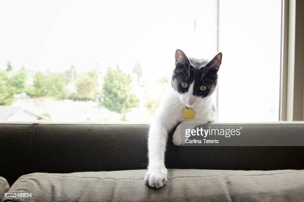 Cat sitting on the back of a sofa in front of a window