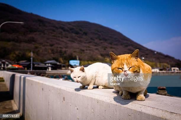 A cat sitting on the rim