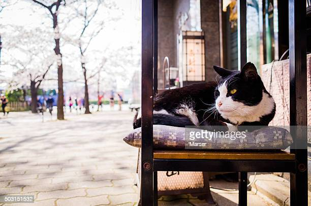 A cat sitting on the zabuton against cherry blossoms
