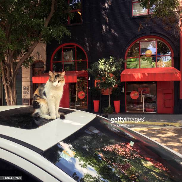 Cat sitting on top of car