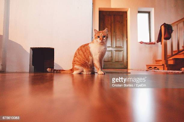 cat sitting on wooden floor - bortes stock-fotos und bilder