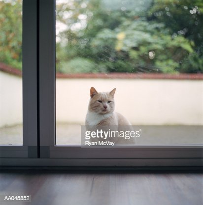 Cat Sitting Outside Glass Doors Looking Into Home High Res