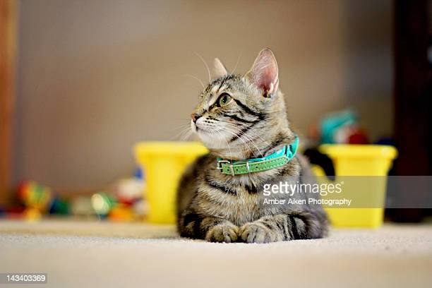 cat sitting - aikāne stock pictures, royalty-free photos & images