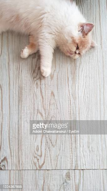 cat sleep on wood back ground - images of ugly feet stock pictures, royalty-free photos & images