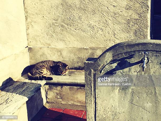 Cat Sleeping Against The Wall