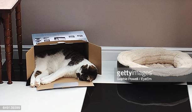 cat sleeping in cardboard box on floor at home - pet bed stock pictures, royalty-free photos & images