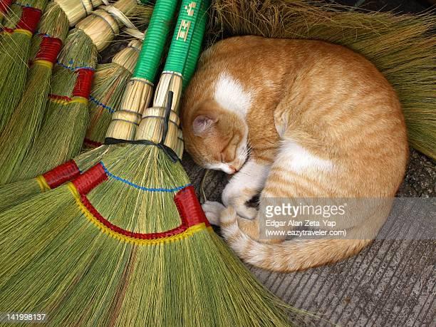 Cat sleeping next to brooms