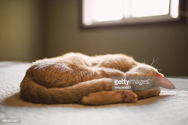 Cat sleeping on a bed at home