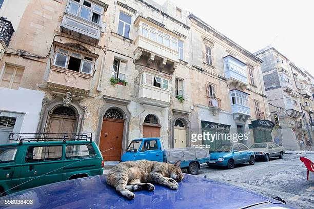 Cat Sleeping On A Parked Car Valletta Malta