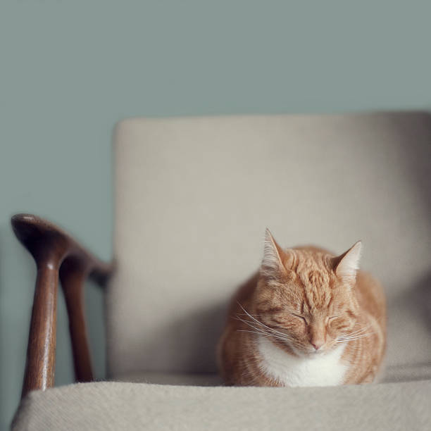 Cat sleeping on comfy creme chair