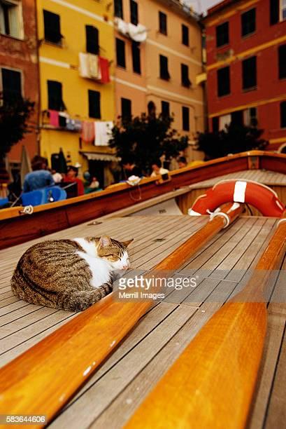 Cat Sleeping on Fishing Boat Deck
