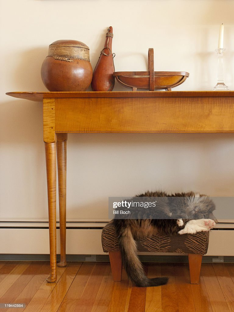 Cat sleeping on foot stool : Bildbanksbilder