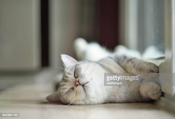cat sleeping on ground - testa di animale foto e immagini stock