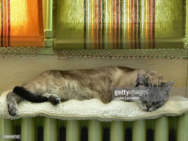 Cat sleeping on radiator