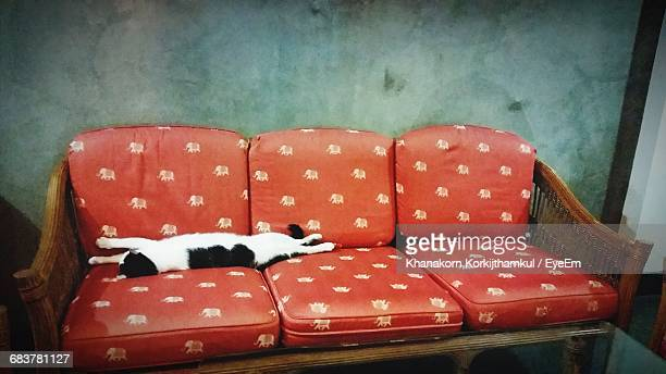 Cat Sleeping On Red Sofa At Home
