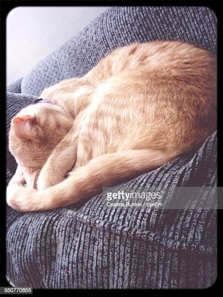 cat sleeping on sofa at home - at home ストックフォトと画像