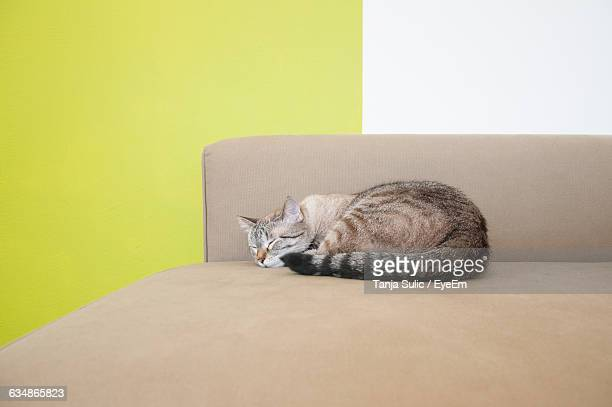 Cat Sleeping On Sofa At Home