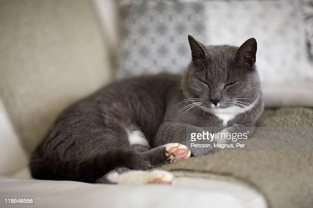 Cat sleeping on sofa