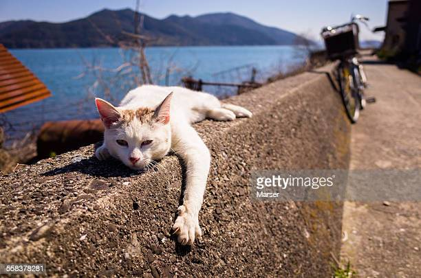 Cat sleeping on the rim by the lake