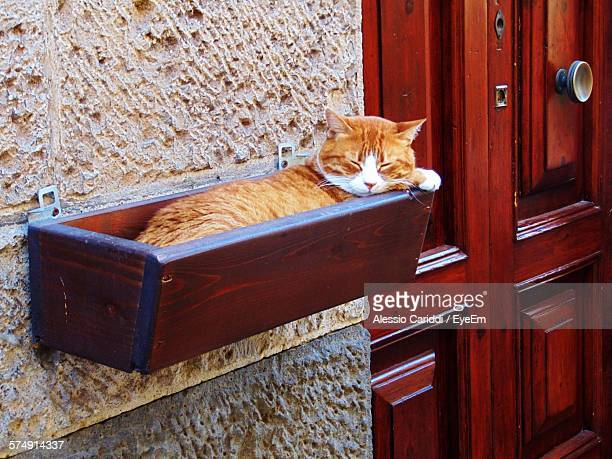 Cat Sleeping On Wooden Box Attached At Wall By Closed Door Outdoors