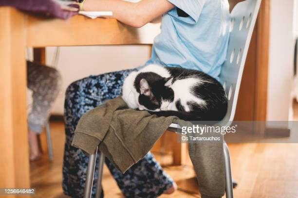 cat sleeping over a jacket in the same chair as its owner - 動物の毛 ストックフォトと画像